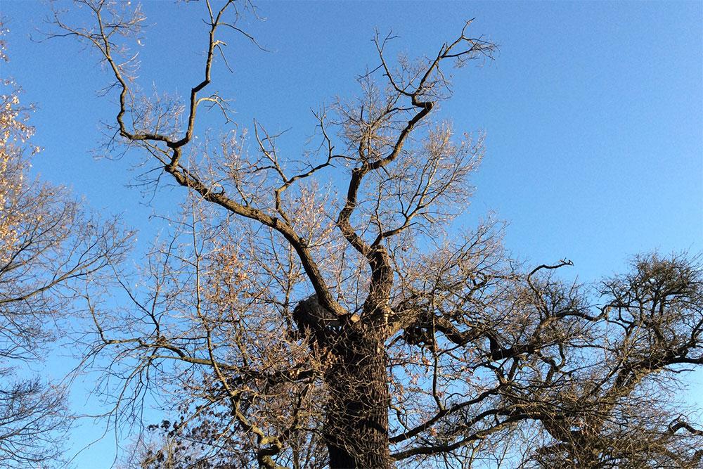 Baumkontrollen: Ersterfassung & Kontrolle