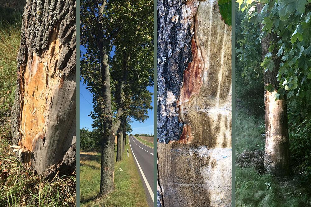 Gutachten bei Schäden an oder durch Bäume