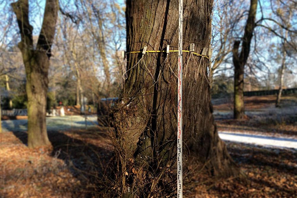 Schall-Tomographie an Bäumen
